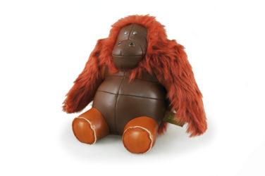 orangutan zuny